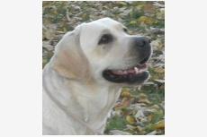 Psík v chovateľskej stanici patrí používateľovi Excelent Dogs
