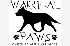 Warrigal Paws