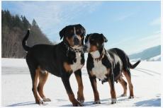 Turovští psi