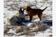 Socializácia šteniatka - I. časť