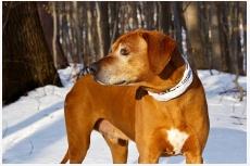 Problematika starnutia psa