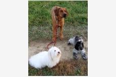 socializácia s inými psami