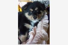 Zachránené šteniatko hľadá nový domov