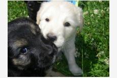 Používateľ JankaG daruje psíka