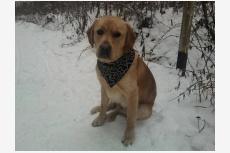Používateľ Kmecova daruje psíka