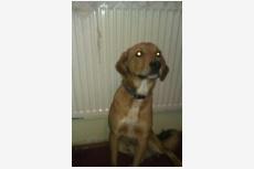 Používateľ Orieskova daruje psíka