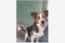 Používateľ OZ ZACHRAN ZIVOT daruje psíka