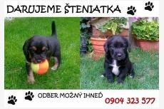 Používateľ Pucikova Lenka daruje psíka