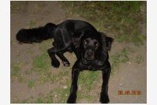 Používateľ Zdenka-Riki daruje psíka