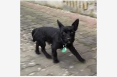 Čierny psík