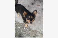 Používateľ KVLdievca našiel psíka