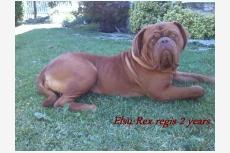 Elsu Rex regis