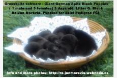 Q. Black Re-Jan Moravia