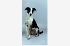 Profil psíka patrí používateľovi arkan