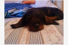 Profil psíka patrí používateľovi Dailli