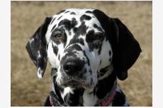Profil psíka patrí používateľovi Delilah