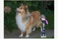 Profil psíka patrí používateľovi Gina