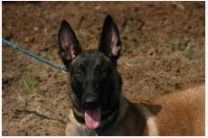 Profil psíka patrí používateľovi Ivan Gabaľ