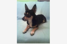 Profil psíka patrí používateľovi Janka47