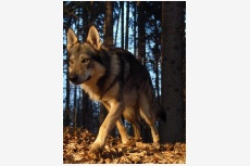 Profil psíka patrí používateľovi JaRkA