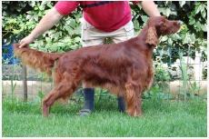 Profil psíka patrí používateľovi JAROFILIP