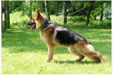 Profil psíka patrí používateľovi Karolina