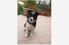 Profil psíka patrí používateľovi Kiara