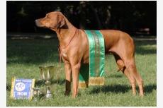 Profil psíka patrí používateľovi Löwenschwanz
