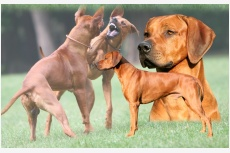 Profil psíka patrí používateľovi Michaela Fajkusova
