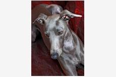 Profil psíka patrí používateľovi Sasa