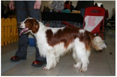 Profil psíka patrí používateľovi slavkaleon