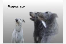 Obrázok používateľa CHS MAGNUS COR