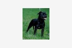 Obrázok používateľa Thor Steinar division dogs