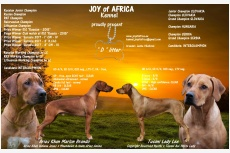 Vrh D - Joy of Africa