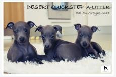 Vrh A - Desert Quickstep
