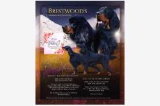 Vrh C - Brestwood's