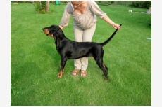 black and tan coonhound JAZZMAN  WHEN  THE  DEALIN´S  DONE
