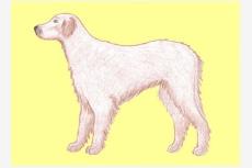 Krycia sústava psa