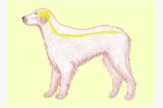 Nervová sústava psa
