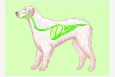 Tráviaca sústava psa