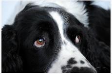 Zrak psa