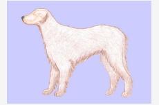 Kostra hlavy psa