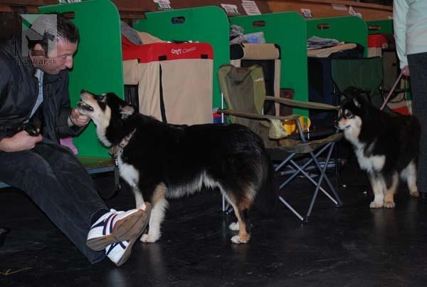 CRUFTS 2011 - fínsky laphund