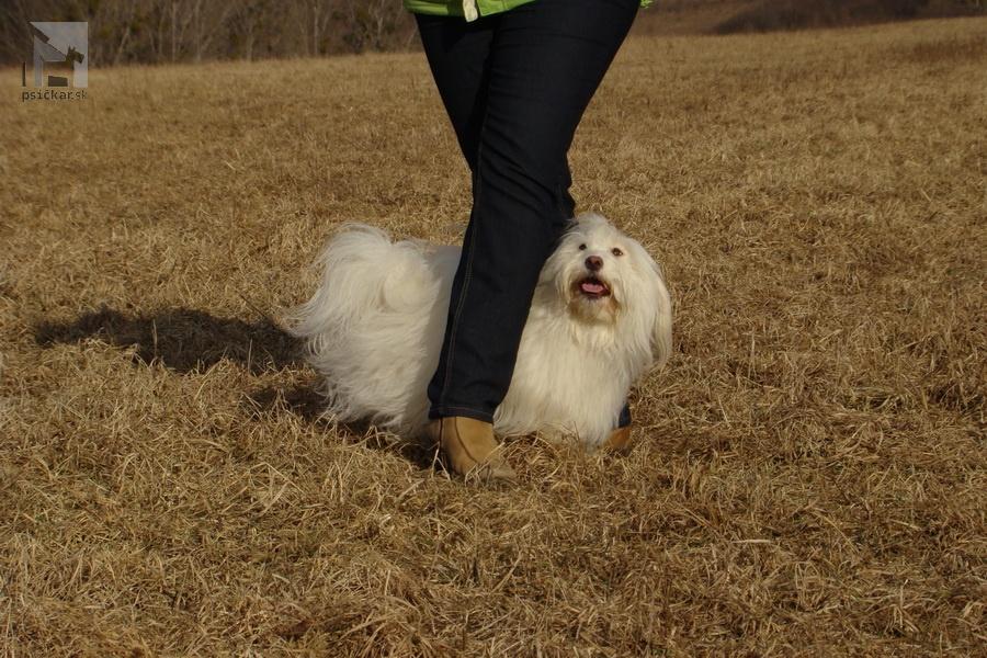 Slalom - psík prejde