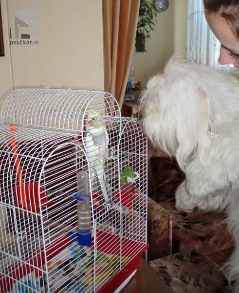 socializácia psa s inými zvieratami