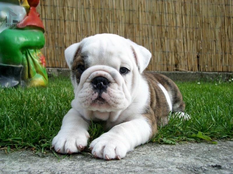 """<a href=""""http://english-bulldog.sk"""" target=""""_blank"""">Beno a Beba</a>"""