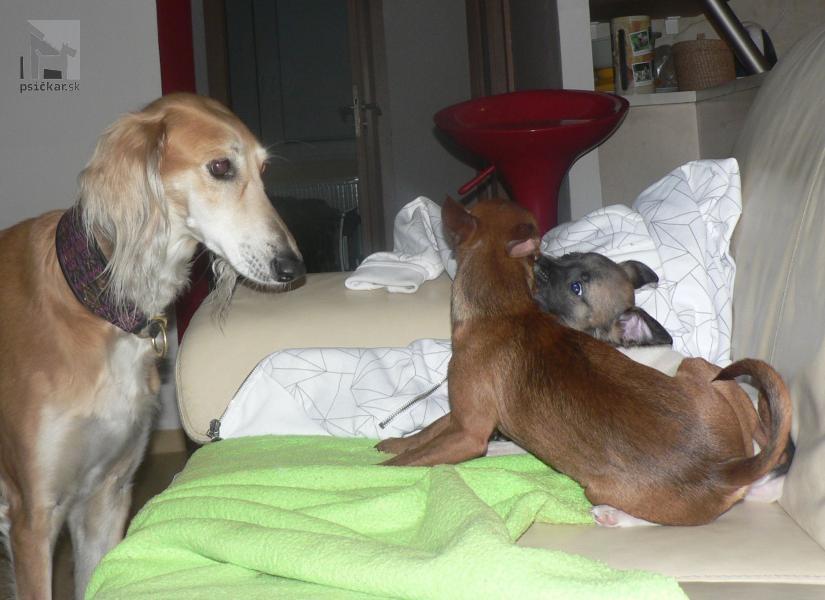 Galériu psíka pridal používateľ ingusha