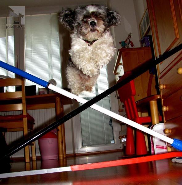Galériu psíka pridal používateľ Dominika a Dolly