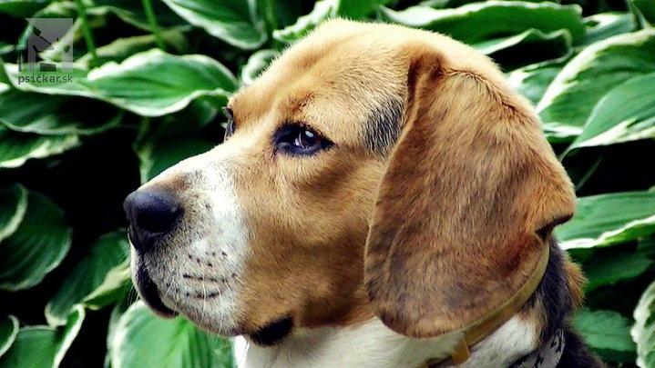 Galériu psíka pridal používateľ Freyja