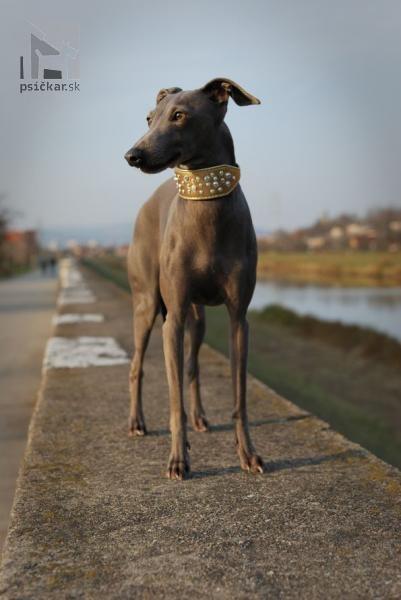 Galériu psíka pridal používateľ Sasa